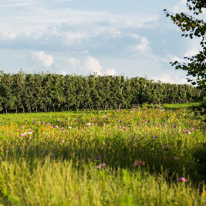 Permagold Blumenwiese